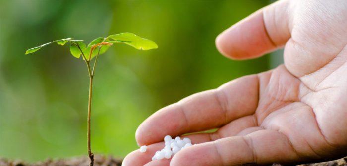 Удобрение ростка азотом